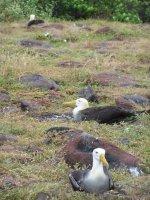 Galapagos_..nd__41_.jpg