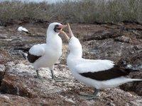 Galapagos_..nd__53_.jpg