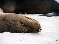 Galapagos_..nd__89_.jpg