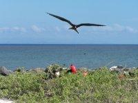Galapagos_..r__118_.jpg
