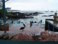 Galapagos_..rt__32_.jpg