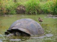 Galapagos_..rt__56_.jpg