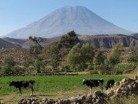 Peru_Arequipa__31_.jpg