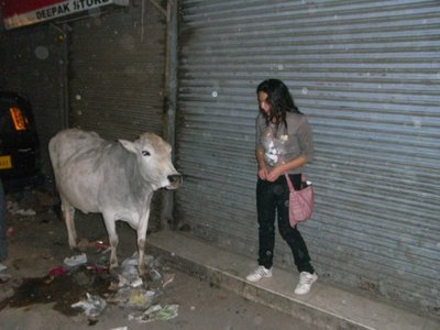 delhi-cow.jpg