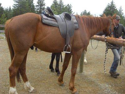 Trever_my_horse.jpg