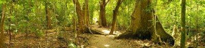 CABO BLANCO pathway panorama