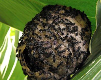 BIRDING flys on nest