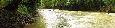 SARAPIQUI rushing creek
