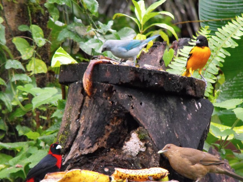BIRDING four varieties