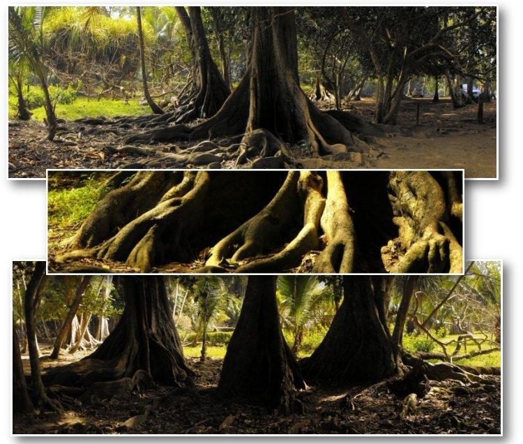 large_TreesComp01.jpg