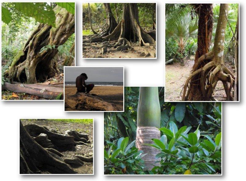 large_TreesComp02.jpg