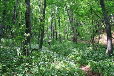 hiking near varazdin, croatia