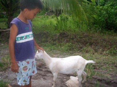 goat in Matanao