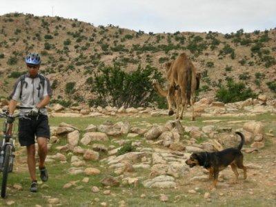 Phil next to wild camel