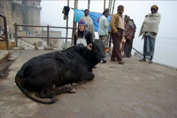cow and ally at varanasi
