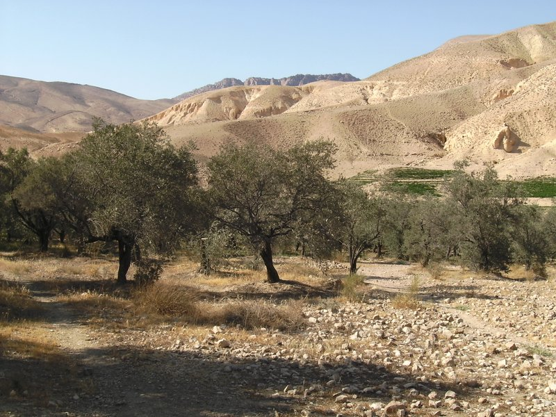Dana Nature Reserve