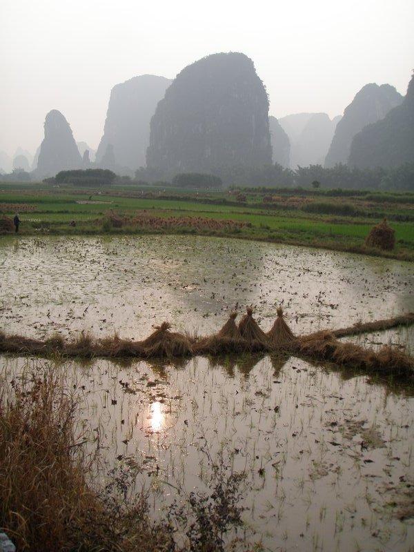 Longshen, rice paddies