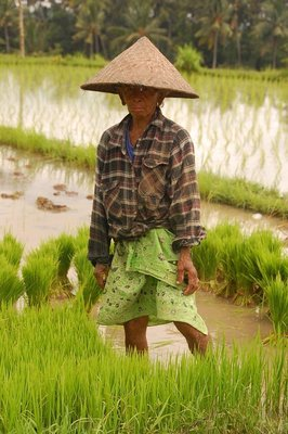 Balinese Rice Farmer
