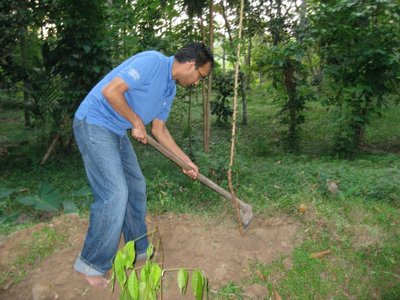 Digging out a manioc root