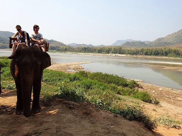 1.1425492930.elephant-riding