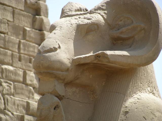 A Shpinx at Karnak