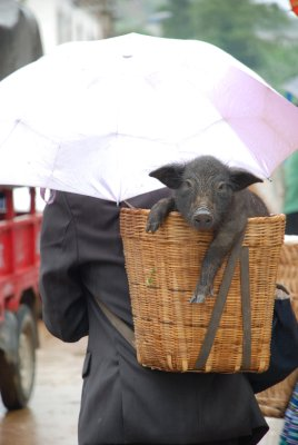 piggy in a basket