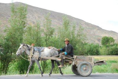 horse carraige