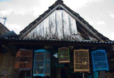 Bird Market_2
