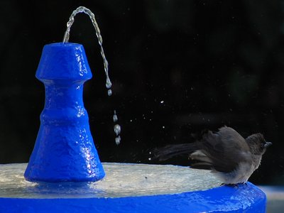 A Bird Shower