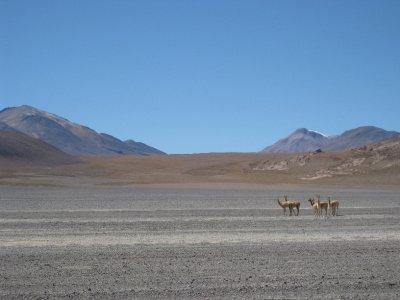 Vucuñas