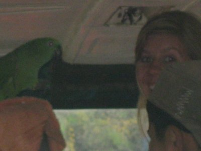 Me making friends with a Macaw on the bus - he took a shining to me and was ruffling his feathers, cooing and talking - he just bit Josh and Yoni, LOL!