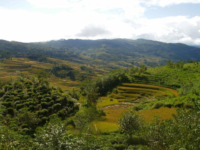 1038 China Yuanyang - Ricefields