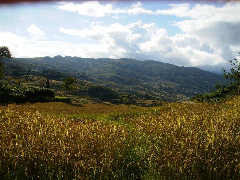 1039 China Yuanyang - Ricefields