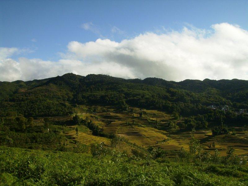 1041 China Yuanyang - Ricefields