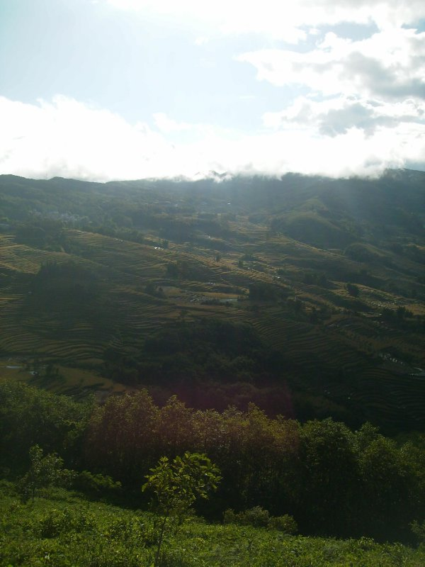 1046 China Yuanyang - Ricefields