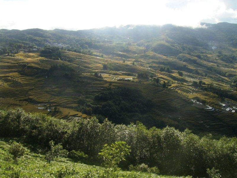 1047 China Yuanyang - Ricefields
