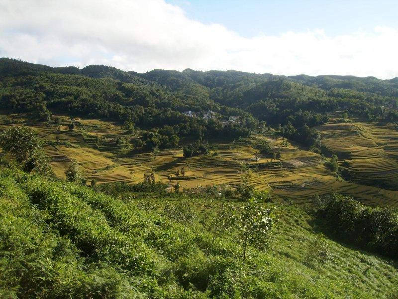 1048 China Yuanyang - Ricefields