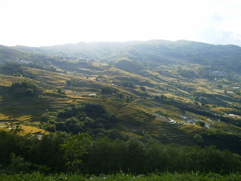 1052 China Yuanyang - Ricefields