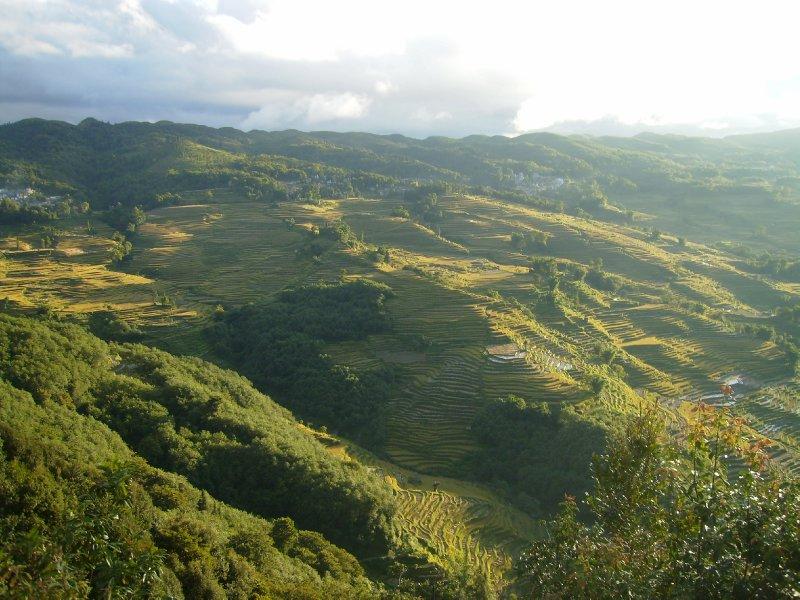 1055 China Yuanyang - Ricefields