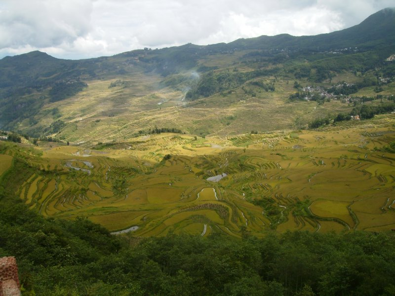 1062 China Yuanyang - Ricefields