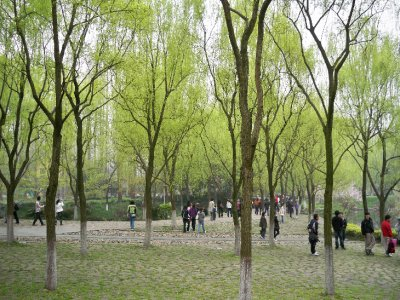 The park at the West Lake