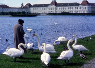 Swans at Schloss Nymphenburg