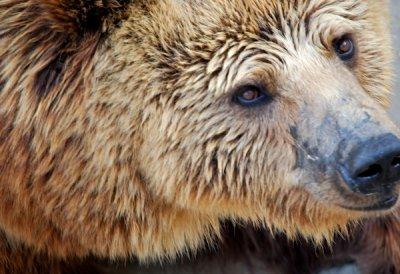 bearclose.jpg