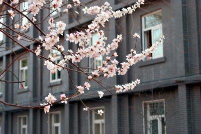 blossom_building.jpg