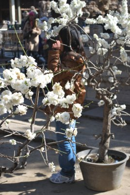 blossomgirl.jpg