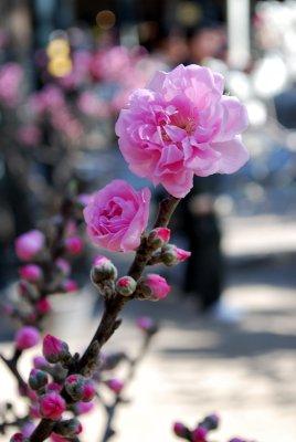 pinkblossom.jpg