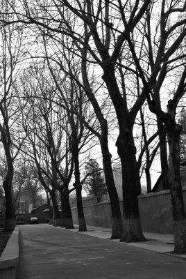 trees_bw.jpg