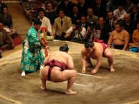 Sumo wrestling