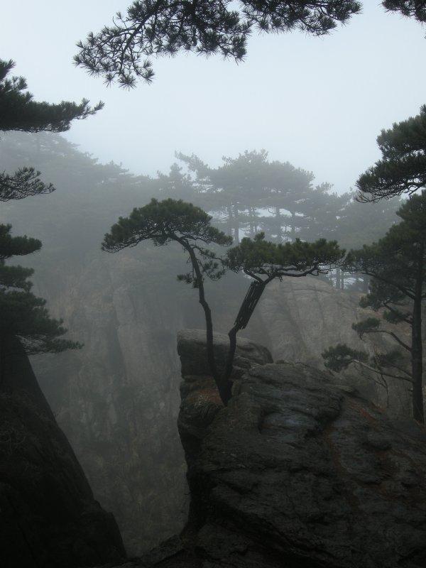 Pine tree views