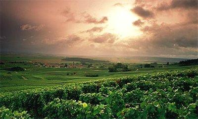 vineyard__2.jpg